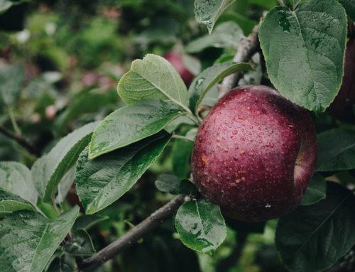 Jeg kan spise æbler – madallergi
